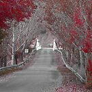 Wee Jasper Bridge Autumn by Kate Howarth