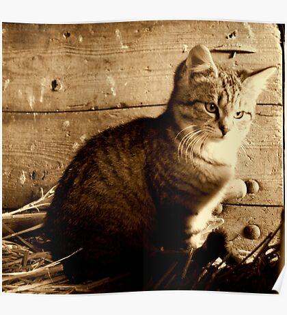 The farm kitten Poster
