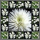 White Flowers Collage featuring Dahlia von BlueMoonRose
