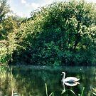 Swan River  by Vicki Field