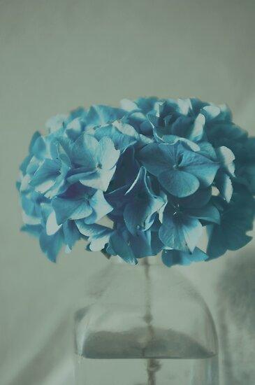 Hydrangea by Anne Staub