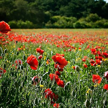 Poppy Flower Field by InspiraImage