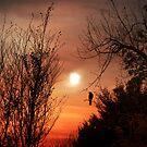 Gorgeous Evening Glow by Zoe Marlowe