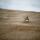 Run Crabby Run by Paul Manning