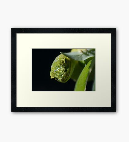 I'm Watching You!... Framed Print