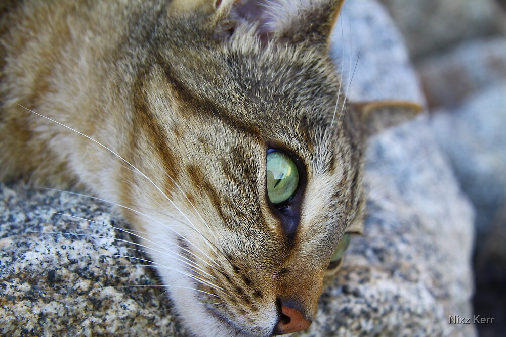 Carter the Cat by Nixz Kerr