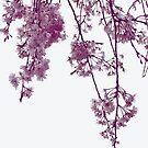 Blüten von greenaomi