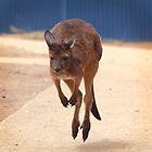 Flying Baby Roo by Daniela Pintimalli