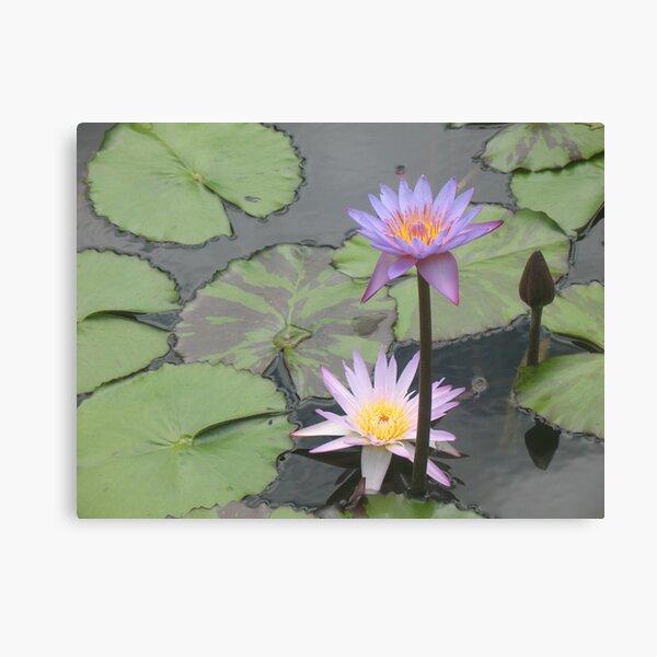 In the Pond of King Kalakaua Canvas Print