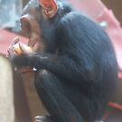 Baby Chimpanzee by Paul Morley