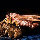 Cicada by Jim Haley