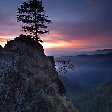 «Arbre solitaire à l'aube» par Isenmann