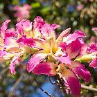 Klare exotische Blumen - blühender Silk Floss-Baum Ceiba Speciosa von Georgia Mizuleva