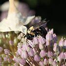 Pollination by DebbieCHayes
