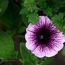 Shrinking Violet by mojo1160