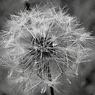 Make a Wish  by Tracey Hampton
