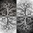 Tree-Checkers Black and White by Troy Stapek