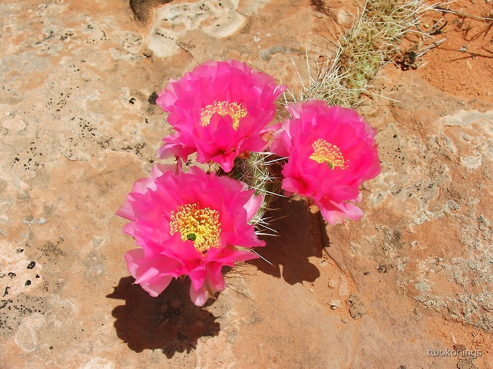 Escalante Cactus by twokonings