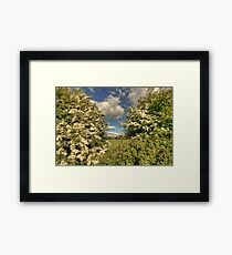 Whitethorn Hedge Framed Print