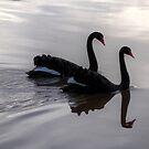 Mirroring Black Swans  by CezB
