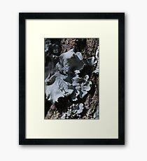 Grey lichen Framed Print