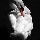 Swan by Samantha Higgs