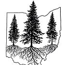 Pine Trees in Ohio by EverhardDesigns