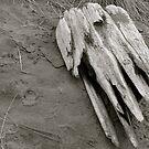 drift wood angel wing by raneangel