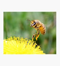 Touching a Golden Meadow Photographic Print