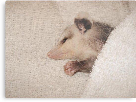 Now I lay me down to sleep - by May Lattanzio