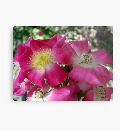 The south's Seven Sister Roses Metal Print