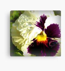 Dazzling Violet Pansy Canvas Print