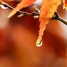 Autumnal by iltby