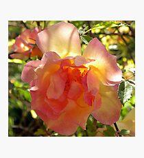 Blushing Beauty Photographic Print