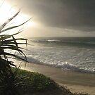 Wategoes Beach - New South Wales by Louise Linossi Telfer