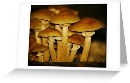 Toads by Sim Baker