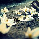 equally delicate - razors and blossoms by afure