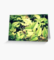 dewdrop Greeting Card