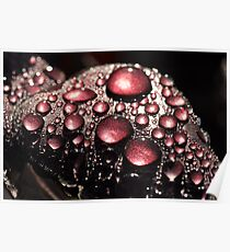 Nature's Bling  Poster