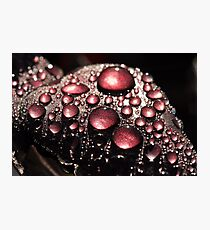 Nature's Bling  Photographic Print