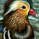 Mandarin duck by tanyabond