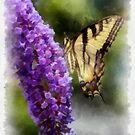 Butterfly Kisses  by JHRphotoART