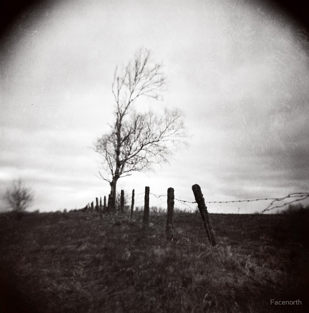 Lonely Tree by Facenorth
