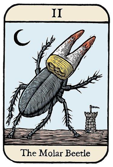 The Molar Beetle by Ellis Nadler