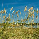 Sea Oats on Cedar Key by Stacey Lynn Payne
