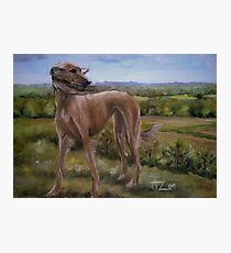 Saluki in Surrey England Photographic Print