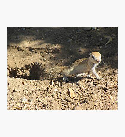 Round-tailed Ground Squirrel ~ Baby Photographic Print