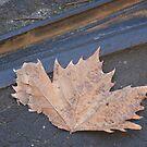 Autumn by v-something
