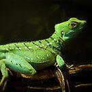 green piece millenarium by gompo