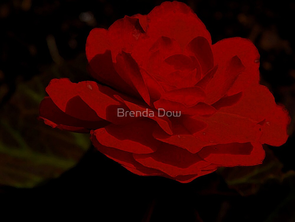 Begonia...... Bewitched, Bothered and Bewildered by Brenda Dow